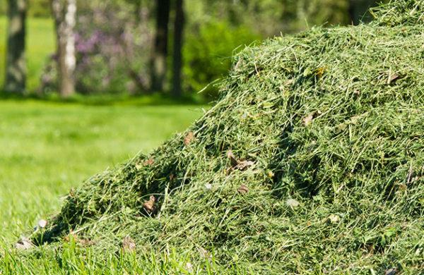 grass-cuttings